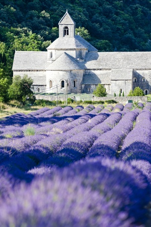 Abbaye de Sénanque avec le champ de lavande, Provence, France