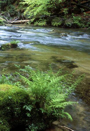 brake fern: Kamenice river, Ceskosaske Svycarsko, Czech Republic Stock Photo