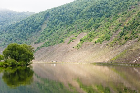 moseltal: Moselle Valley, Rhineland-Palatinate, Germany