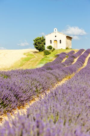chapel with lavender field, Plateau de Valensole, Provence, France photo