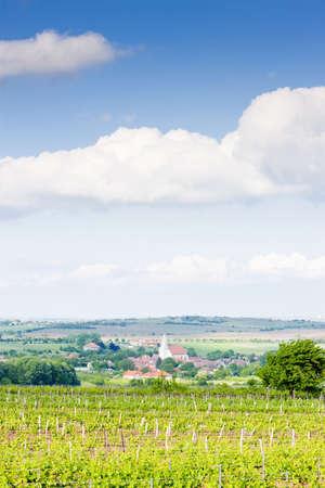znojmo region: vineyard Nebenfuhr, Lower Austria, Austria and Hnanice village, Czech Republic