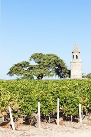 bordeaux region: Chateau de la Tour, By, Bordeaux Region, France