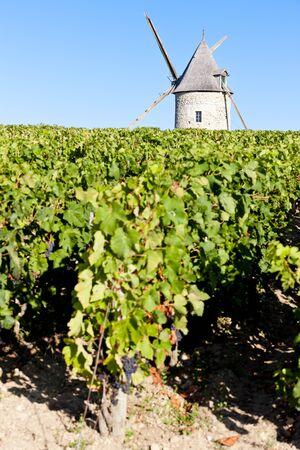 bordeaux region: vineyard with windmill near Blaignan, Bordeaux Region, France Stock Photo