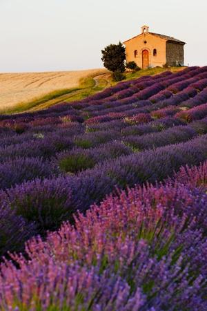 lavanda: capilla con campos de lavanda y el grano, la Meseta de Valensole, Provence, Francia