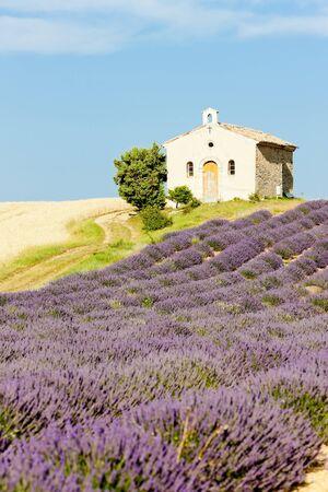alpes: chapel with lavender and grain fields, Plateau de Valensole, Provence, France
