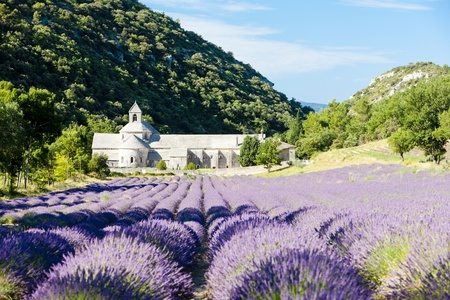 abbey: Senanque abbey with lavender field, Provence, France