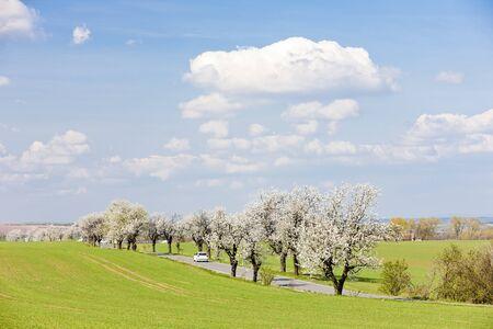 r�publique  tch�que: paysage de printemps avec une route, la R�publique tch�que