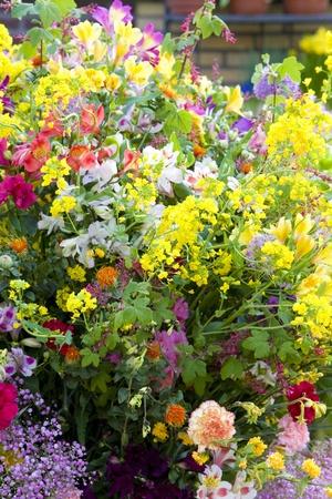 lisse: boeket bloemen, Keukenhof Gardens, Lisse, Nederland Stockfoto