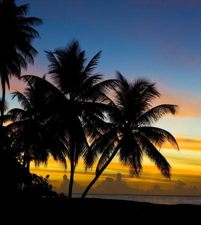 sunset over Caribbean Sea, Turtle Beach, Tobago Standard-Bild