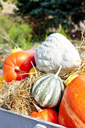 still life of pumpkins Stock Photo - 13185322
