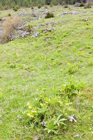 bosnia hercegovina: spring meadow, Bosnia and Hercegovina