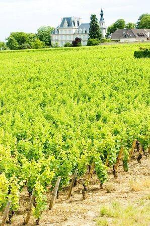 crus: grand cru vineyard near Fixin, Cote de Nuits, Burgundy, France