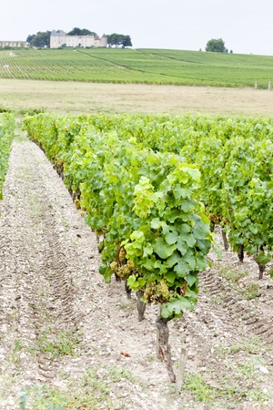 gironde department: vineyard and Chateau dYquem, Sauternes Region, France