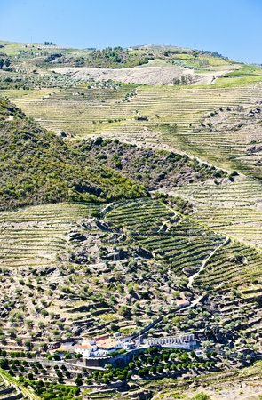 vineyars in Douro Valley, Portugal Stock Photo - 13531897