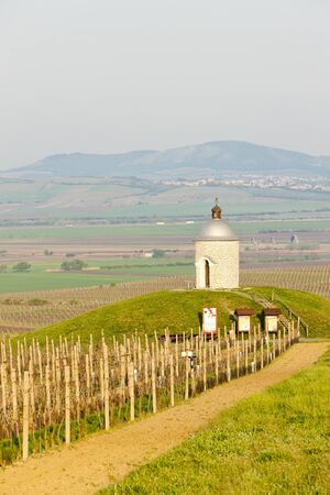 chapel with vineyard near Velke Bilovice, Czech Republic Stock Photo - 13524104