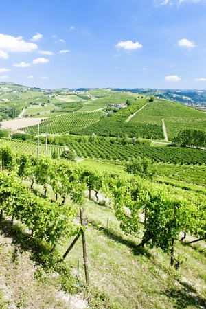 vineyars near Grinzane Cavour, Piedmont, Italy photo