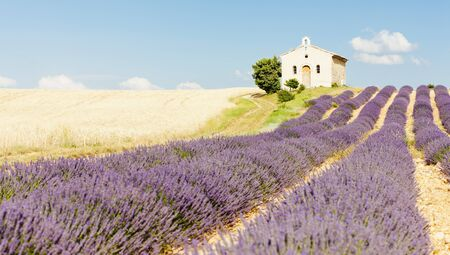chapel with lavender and grain fields, Plateau de Valensole, Provence, France Stock Photo - 13512790