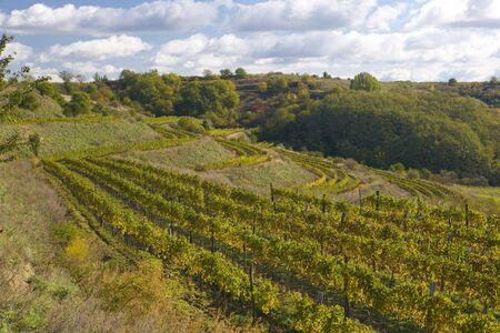falltime: vineyards, Eko Hnizdo, Czech Republic Stock Photo