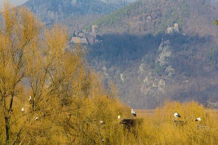 storks breeding (Centre de Réintroduction des Cigognes), Hunawihr, Alsace, France Stock Photo - 13524373
