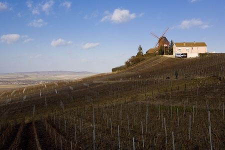 champagne region: windmill and vineyard near Verzenay, Champagne Region, Burgundy, France