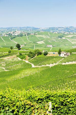piedmont: vineyars near Barolo, Piedmont, Italy Stock Photo