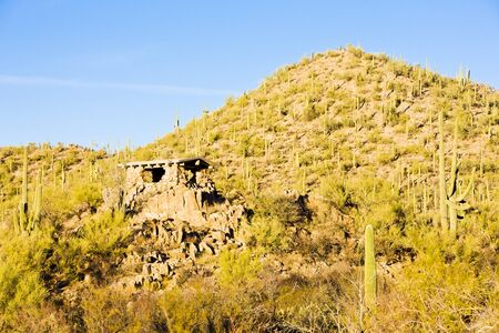 Saguaro National Park, Arizona, USA Stock Photo - 15372458