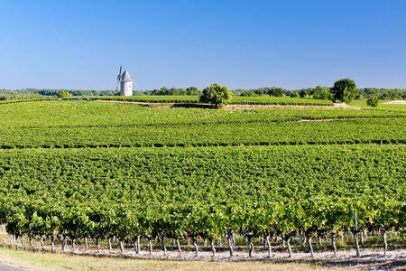aquitaine: vineyard with windmill near Blaignan, Bordeaux Region, France Stock Photo