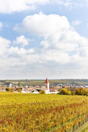 autumnal vineyards in Retz region, Lower Austria, Austria Stock Photo - 15523779