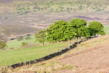yorkshire and humber: North York Moors National Park, North Yorkshire, England