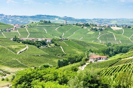 viniculture: vineyars near Barbaresco, Piedmont, Italy