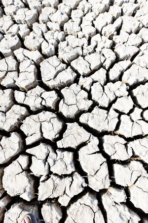 regional: tierra seca, Parque Regional de Camargue, Provenza, Francia