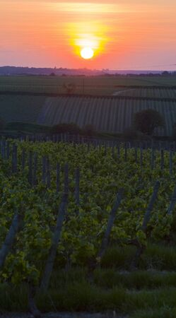 auroral: sunset, vineyards near Montsoreau, Pays-de-la-Loire, France