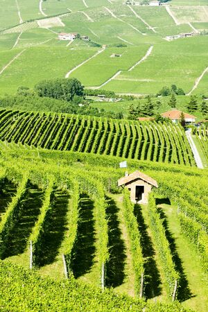vineyars near Barolo, Piedmont, Italy Stock Photo - 17176669