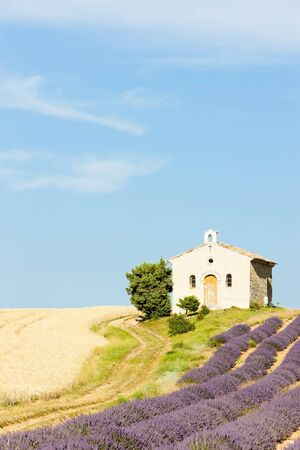 chapel with lavender and grain fields, Plateau de Valensole, Provence, France photo