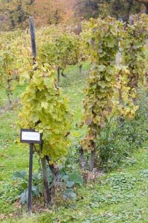 falltime: Moselpfahlerziehung, Eberbach, Hessen, Germany