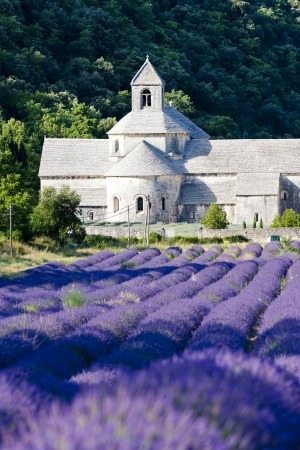 senanque: Senanque abbey with lavender field, Provence, France