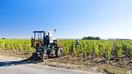gironde department: vineyard with a tractor, Bordeaux Region, France