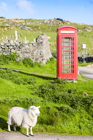united kingdom: telephone booth with sheep, Clashnessie, Highlands, Scotland Stock Photo