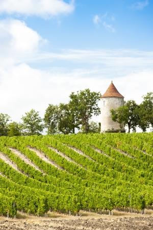 Ribagnac、フランス ・ アキテーヌ地域圏ドルドーニュ県部近くの風車のあるブドウ園