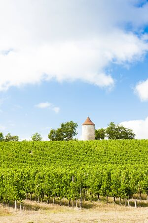 aquitaine: vineyard with windmill near Ribagnac, Dordogne Department, Aquitaine, France Stock Photo