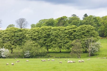 milton: landscape with sheep near Laigh Milton, East Ayrshire, Scotland Stock Photo