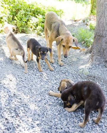 mujer perro: perra con cachorros, Tobago