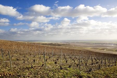 champagne region: vineyards of Champagne Region, Burgundy, France