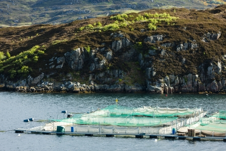 salmon farm, Loch a Chairn Bhain, Highlands, Scotland photo