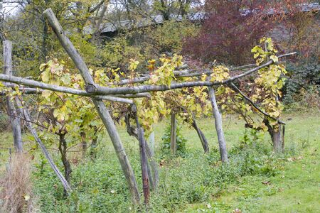 falltime: Weiser Elbling, Eberbach, Hessen, Germany