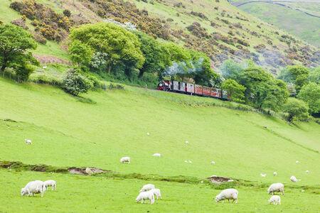 narrow gauge railway: steam train, Talyllyn Railway, Wales