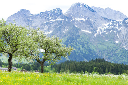 upper austria: Austrian Alps near Hallstatt, Upper Austria, Austria