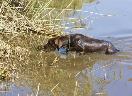 shootings: hunting dog in pond
