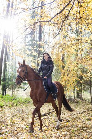 femme a cheval: Cavalier � cheval dans la nature automnale