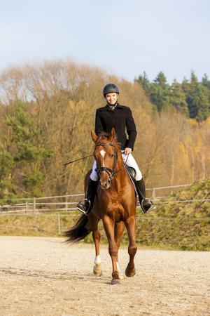 equestrian on horseback photo
